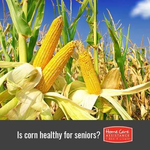 Is Corn Healthy for the Elderly in Waterloo, CAN?